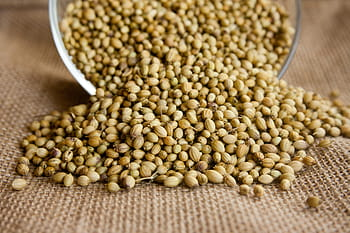Coriander-Seed-Oil-Benefits-Uses